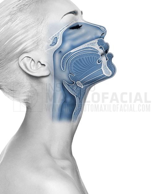 tractament de l'apnea del son: nivells d'actuació